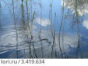 Змея в реке. Стоковое фото, фотограф Витинская Светлана / Фотобанк Лори