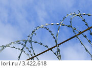 Витки колючей проволоки на фоне синего неба. Стоковое фото, фотограф Галина Власова / Фотобанк Лори
