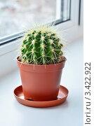 Купить «Эхинокактус Грусона (Echinocactus grusonii) на окне», эксклюзивное фото № 3422922, снято 25 августа 2019 г. (c) Елена Коромыслова / Фотобанк Лори