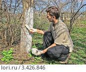 Купить «Весенняя побелка плодовых деревьев на приусадебном участке», фото № 3426846, снято 30 апреля 2011 г. (c) Владимир Сергеев / Фотобанк Лори