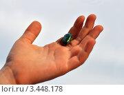 Маленький жук на детской ладошке. Стоковое фото, фотограф Наталия Преображенская / Фотобанк Лори