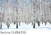 Купить «Берёзовый лес зимой», фото № 3454510, снято 2 апреля 2012 г. (c) Елена Ковалева / Фотобанк Лори
