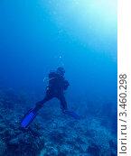 Купить «Подводный пейзаж с дайвером», фото № 3460298, снято 7 декабря 2011 г. (c) Сергей Дубров / Фотобанк Лори