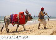 Купить «Наряженный буйвол и индус в красном тюрбане идут по пляжу. Индия. Гоа», эксклюзивное фото № 3471954, снято 18 апреля 2012 г. (c) Яна Королёва / Фотобанк Лори