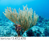 Купить «Тропический подводный пейзаж с кораллами», фото № 3472470, снято 7 декабря 2011 г. (c) Сергей Дубров / Фотобанк Лори