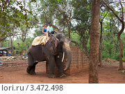 Катание на слоне. Индия. Гоа (2012 год). Редакционное фото, фотограф Яна Королёва / Фотобанк Лори