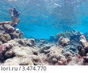 Купить «Тропический подводный пейзаж с кораллами», фото № 3474770, снято 9 декабря 2011 г. (c) Сергей Дубров / Фотобанк Лори