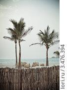 Высокие пальмы на морском пляже. Стоковое фото, фотограф Дарья Петренко / Фотобанк Лори