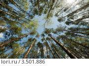 Купить «Взгляд вверх», фото № 3501886, снято 1 мая 2012 г. (c) Ольга Денисова / Фотобанк Лори