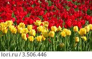 Купить «Поле тюльпанов», видеоролик № 3506446, снято 12 мая 2008 г. (c) Losevsky Pavel / Фотобанк Лори