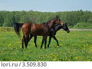 Купить «Лошади на выпасе», фото № 3509830, снято 11 мая 2012 г. (c) Елена Азарнова / Фотобанк Лори