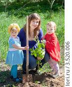 Купить «Молодая женщина с двумя детьми сажает дерево в огороде», фото № 3520006, снято 11 мая 2012 г. (c) Яков Филимонов / Фотобанк Лори