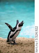 Купить «Африканский пингвин (Spheniscus demersus)», фото № 3524922, снято 7 апреля 2012 г. (c) Татьяна Белова / Фотобанк Лори