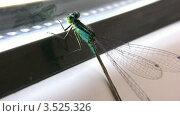 Купить «Стрекоза на окне», видеоролик № 3525326, снято 2 сентября 2008 г. (c) Losevsky Pavel / Фотобанк Лори