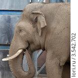 Купить «Московский зоопарк, Слон», эксклюзивное фото № 3542702, снято 7 мая 2012 г. (c) Дмитрий Неумоин / Фотобанк Лори