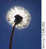 Купить «Одуванчик на фоне солнца», фото № 3546502, снято 26 мая 2012 г. (c) Юрий Кирсанов / Фотобанк Лори