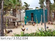 Купить «Домашнее сельское хозяйство в Тунисе», фото № 3552034, снято 1 мая 2012 г. (c) Кекяляйнен Андрей / Фотобанк Лори