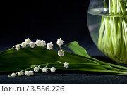 Купить «Цветы ландыша на фоне круглой вазы», фото № 3556226, снято 30 мая 2012 г. (c) Ольга Денисова / Фотобанк Лори