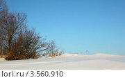 Купить «Зимний лес», видеоролик № 3560910, снято 18 апреля 2009 г. (c) Losevsky Pavel / Фотобанк Лори