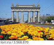 Триумфальная арка на Московском проспекте. Город украшен цветами тюльпанов (2012 год). Редакционное фото, фотограф Jumbo / Фотобанк Лори