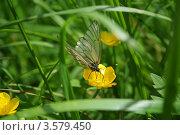 Бабочка. Стоковое фото, фотограф Сиверина Лариса Игоревна / Фотобанк Лори