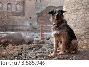Купить «Пограничный пёс», эксклюзивное фото № 3585946, снято 4 апреля 2012 г. (c) Литвяк Игорь / Фотобанк Лори