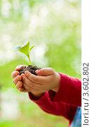 Зеленый росток в детских руках. Стоковое фото, фотограф Дмитрий Наумов / Фотобанк Лори