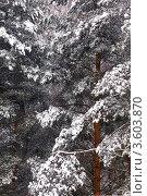 Зима. Стоковое фото, фотограф Вячеслав Цыкун / Фотобанк Лори