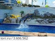 Купить «Севастопольский дельфинарий», фото № 3606562, снято 7 июня 2012 г. (c) Саломатников Владимир / Фотобанк Лори