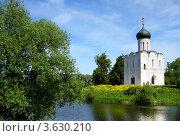 Купить «Церковь Покрова на Нерли, Боголюбово, Владимирская область», фото № 3630210, снято 7 июня 2011 г. (c) ElenArt / Фотобанк Лори