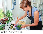 Купить «Женщина на кухне готовит салат из рукколы с креветками», эксклюзивное фото № 3632158, снято 24 мая 2012 г. (c) Алёшина Оксана / Фотобанк Лори