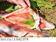 Купить «Приготовление форели на решетке», эксклюзивное фото № 3642074, снято 17 июня 2012 г. (c) Алёшина Оксана / Фотобанк Лори