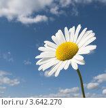 Ромашка на фоне голубого неба. Стоковое фото, фотограф Dmitry Rumyntsev / Фотобанк Лори