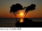 Золотая мечта. Стоковое фото, фотограф Андрей Дюжечкин / Фотобанк Лори