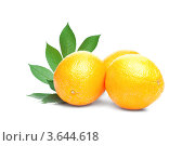 Апельсины с зелёными листьями на белом фоне. Стоковое фото, фотограф Gerasimova Inga / Фотобанк Лори