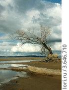 Пейзаж с одиноким деревом на берегу. Стоковое фото, фотограф Алексей Макшаков / Фотобанк Лори