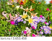 Купить «Разноцветные цветы. Летний солнечный день», фото № 3653458, снято 8 июля 2012 г. (c) Екатерина Овсянникова / Фотобанк Лори