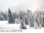 Купить «Лес под снегопадом», фото № 3657570, снято 3 февраля 2012 г. (c) Иван Михайлов / Фотобанк Лори