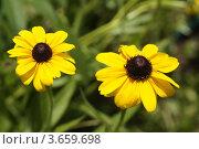Желтые цветы. Стоковое фото, фотограф Александр Иванович Кочунов / Фотобанк Лори