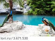 Абхазия, Голубое озеро и павлины (2012 год). Стоковое фото, фотограф Алан Мамуков / Фотобанк Лори