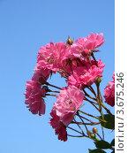 Цветы на фоне неба. Стоковое фото, фотограф Павел Игоревич / Фотобанк Лори