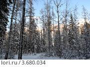 Зима в лесу. Стоковое фото, фотограф Юлия Науменко / Фотобанк Лори