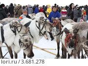 Праздник охотников и оленеводов (2011 год). Редакционное фото, фотограф Бордачёва Светлана / Фотобанк Лори