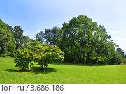 Купить «Летний парк: деревья и газон. Сочинский Дендрарий», фото № 3686186, снято 8 июля 2012 г. (c) Анна Мартынова / Фотобанк Лори
