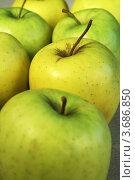 Купить «Зеленые яблоки», фото № 3686850, снято 1 мая 2010 г. (c) Александр Скопинцев / Фотобанк Лори