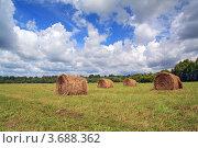 Купить «Рулоны сена на поле в летний солнечный день», фото № 3688362, снято 20 июля 2012 г. (c) Сергей Яковлев / Фотобанк Лори