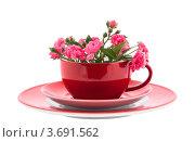 Купить «Красная кофейная чашка с цветками розы, изолировано на белом фоне», фото № 3691562, снято 2 июня 2020 г. (c) Marina Appel / Фотобанк Лори