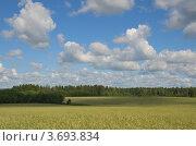 Тень от облаков над ячменным полем. Стоковое фото, фотограф Александр Кондрушенко / Фотобанк Лори