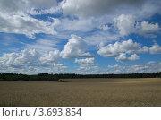 Облака над хлебным полем. Стоковое фото, фотограф Александр Кондрушенко / Фотобанк Лори