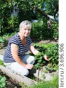 Женщина пенсионного возраста на грядке рядом с клубникой. Стоковое фото, фотограф Кекяляйнен Андрей / Фотобанк Лори